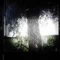 Träd och blad