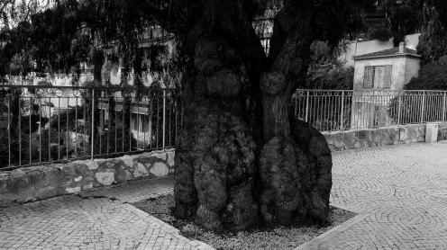 Snyggt träd