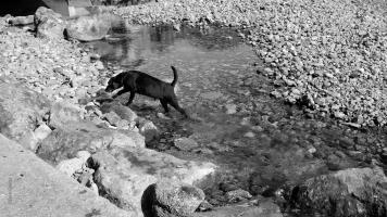 Hund o vatten