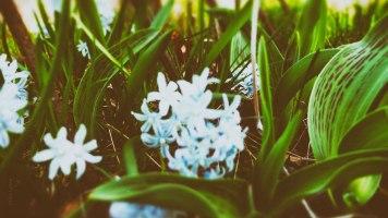 Lite blomster