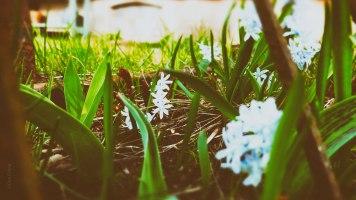 Mer blomster