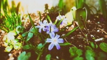 Ännu mera blomster
