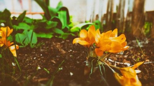 Och så sista blomman