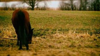 Lyssna på hästen som äter