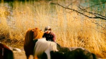 Nille o Hästarna 1