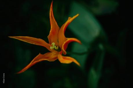 Blommor (1)
