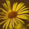Blommor (7)