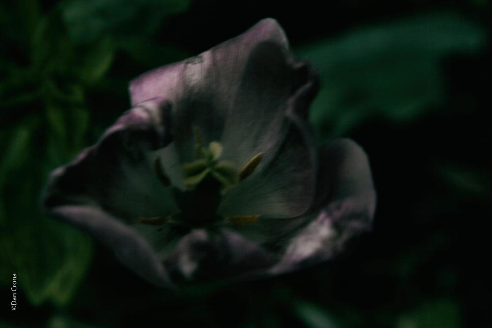 Blommor (8)