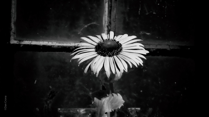flowerbw 1