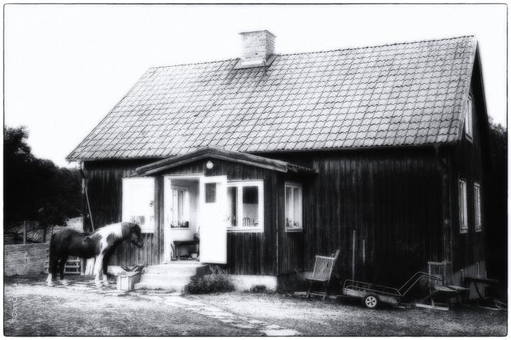 ringsö (5)